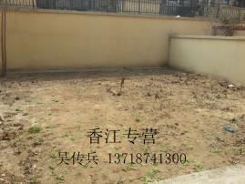 急急急!香江二期 联排边户别墅 带花园280平 毛坯房 出售